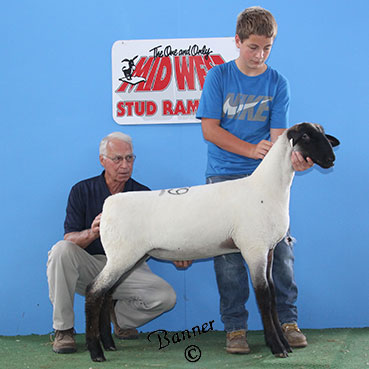 1st late feb ewe lamb sold to Chris Schroeder