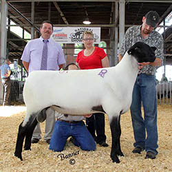 Reserve Champion Ram at Sedalia in 2015