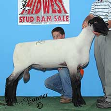 Picture of a son of Tuf sold to Mike Gloege