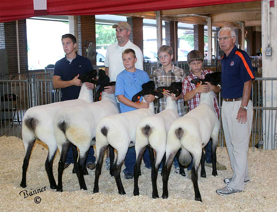 our 2012 flock at the Illinois State Fair